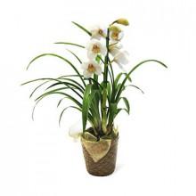 Orquidea Cymbidium - espanol
