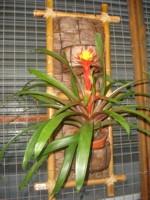 Fotografia das Bromélias em decoração